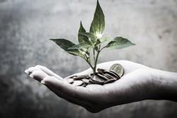 Hand_Money_Plant